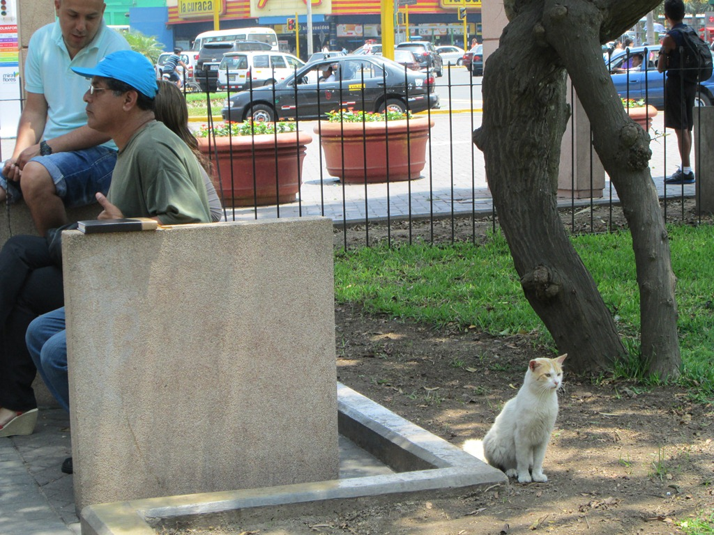 gatos en el parque central